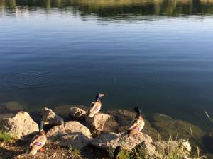 Förderung Gewässerökologie für kommunale Förderungswerber