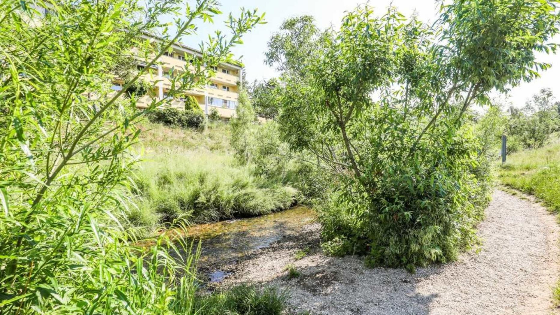 Lieisngbach mit Gebüsch und Kieseln